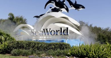 Sea World furloughs more than 90% of its employees over coronavirus pandemic