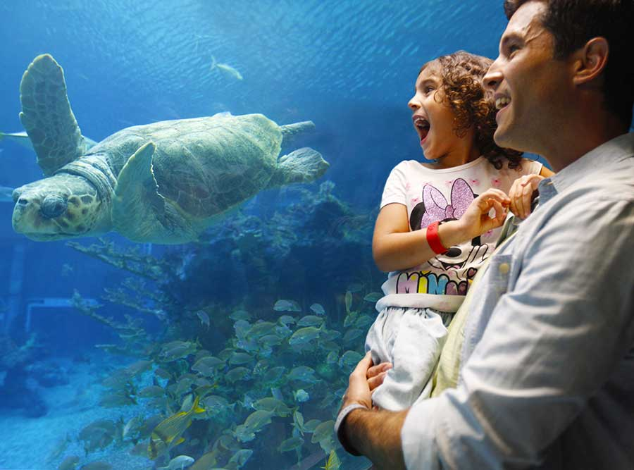 Guests learning more about our friends under the sea, Walt Disney World Resort.