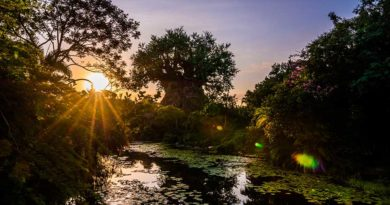 #DisneyMagicMoments: Check Out These Sunrise Views from Disney's Animal Kingdom Theme Park