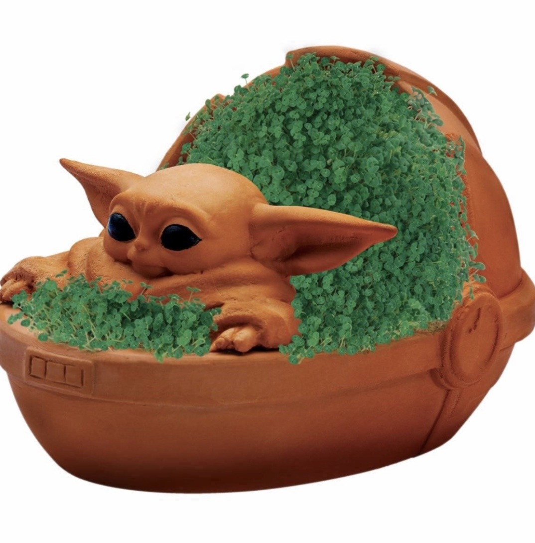 The Child Chia Pet, Coming Soon! 1