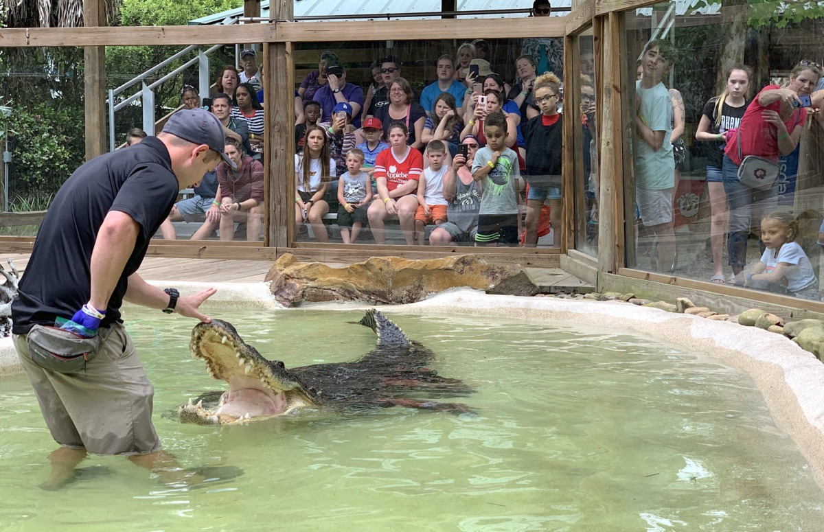 Wild Florida hosts 4th Annual Gator Week promoting alligator conservation & family fun 3