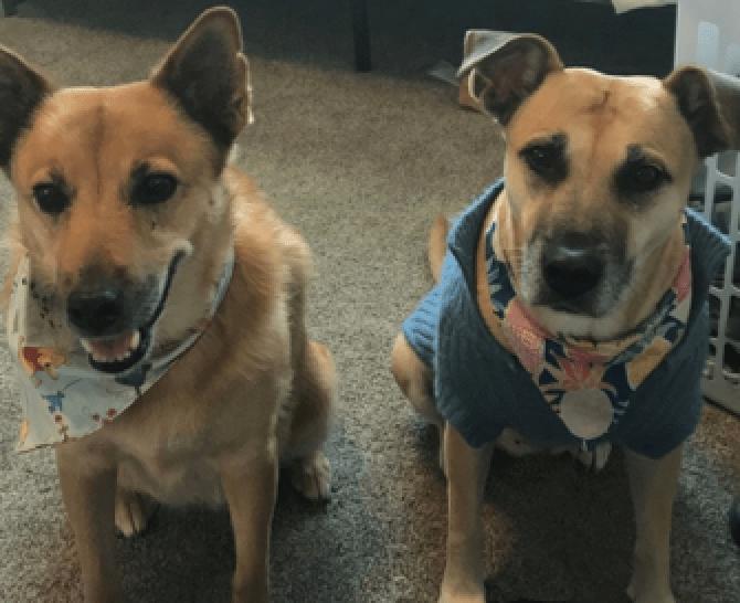 Shawn Becker, Disney Vacation Club Regulatory Affairs Specialist dogs Nani and Nala