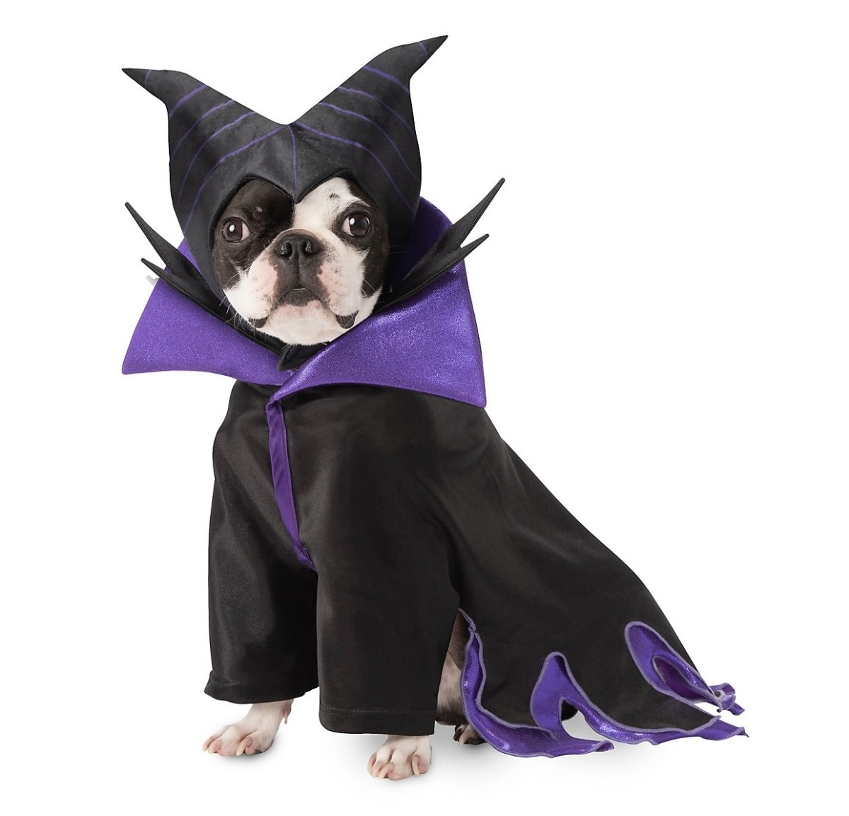 New Disney Halloween Costumes for Pets at shopDisney! 1