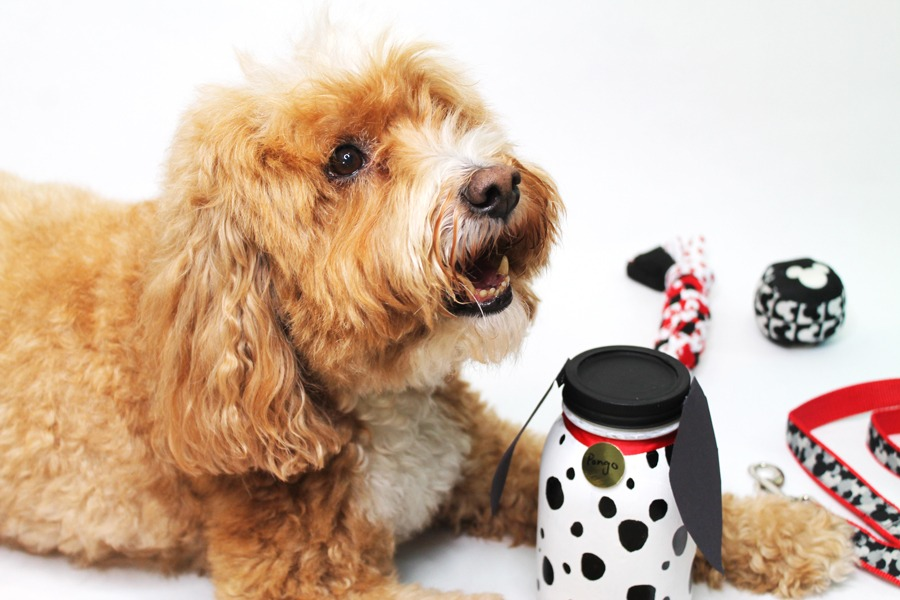 Dog with DIY Disney doggy treat jar