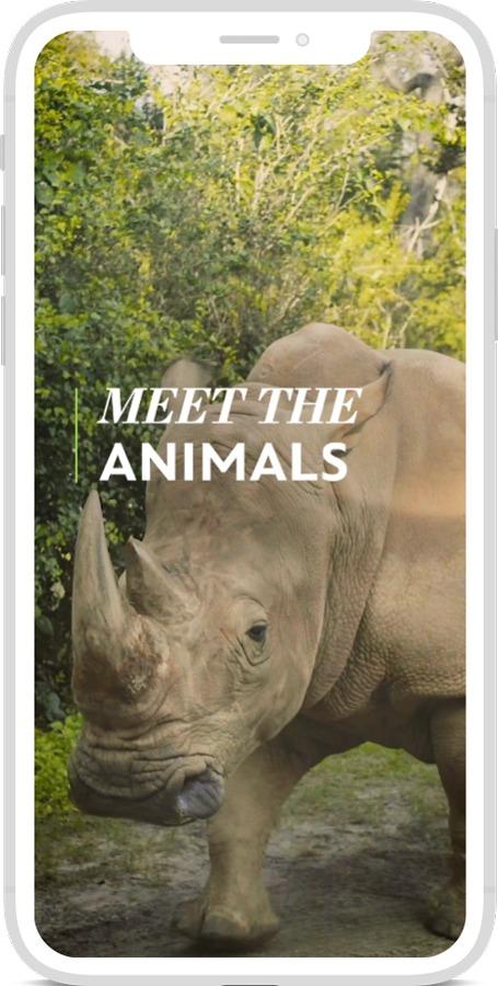 "Disney Parks Wild Sights"" Video Series  - Meet the Animals"