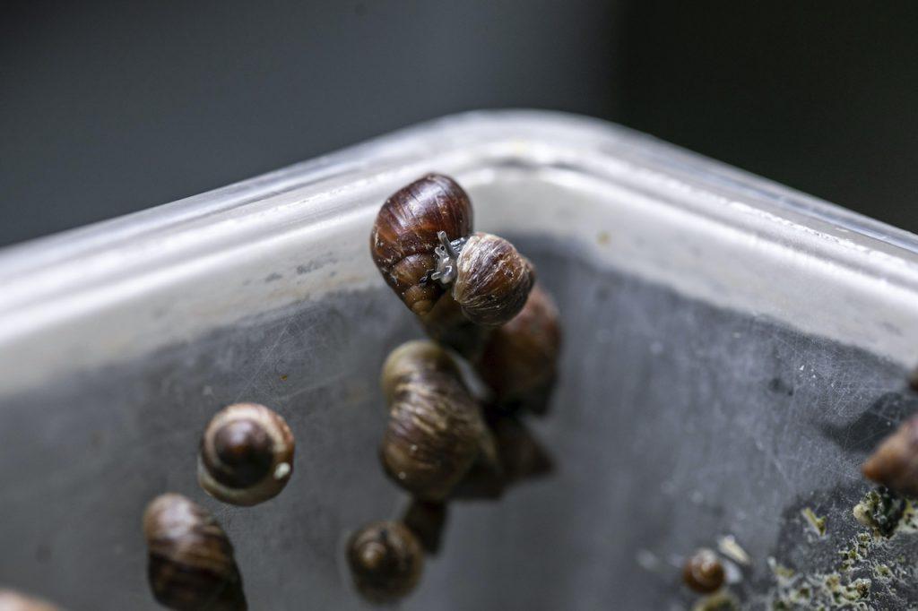Partula Snails at Walt Disney World Resort